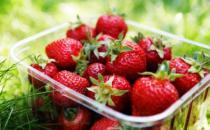 吃草莓如何有效清洗果蔬农残