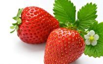 空心草莓是激素催熟的吗?