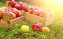 各种疾病的病人适合吃哪些水果
