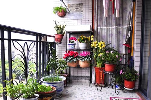 阳台怎么种花最合适?