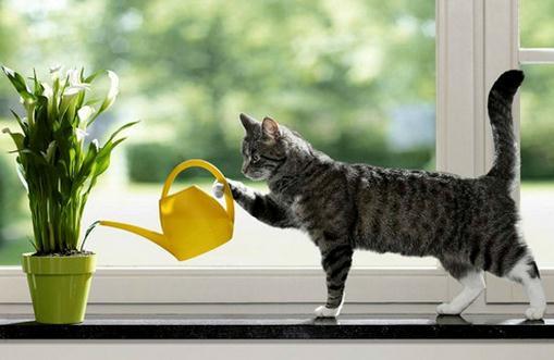 过期牛奶浇花的可行性和注意事项