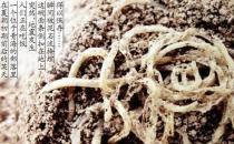 中国人的传统主食面条最早起源于哪个朝代