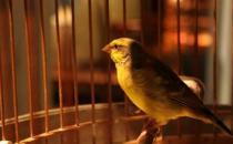 家里养鸟可以促进身心健康