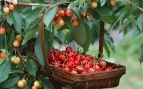 五月吃这些水果帮你抗衰老