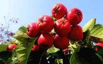 子宫肌瘤吃什么好?6种水果多多益善