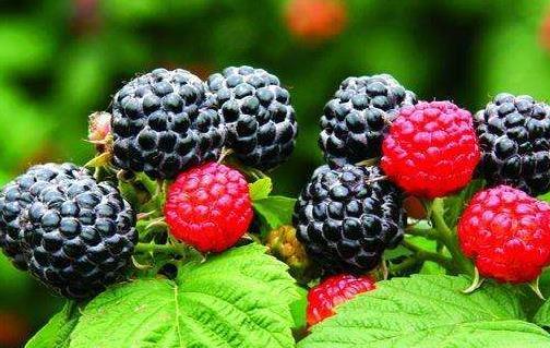 冬季吃這些食物能補腎