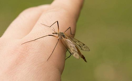 看见蚊子正在吸血到底打不打