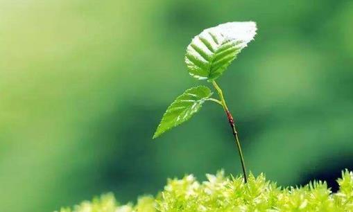 一年之计在于春,不得不知的春季养生常识