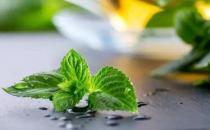 国外护理人员提供的生活妙招 薄荷味可以除臭