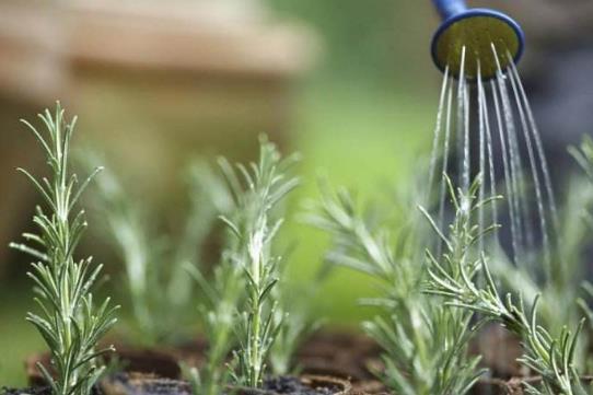 养花方法技巧大全 家庭养花的水肥光土四大要点总结