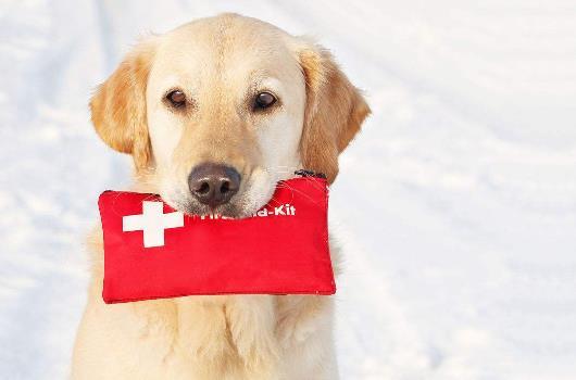 关于爱狗的日常急救常识