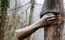 世界上最孤独的手 握了半个世纪树干 游客却说太残忍
