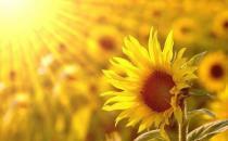 乐观心态是健康内因 生活中保持乐观心态的方法