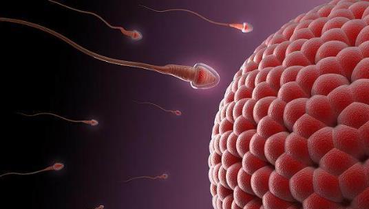 备孕后长期不孕难怀孕 4个因素影响女性受孕