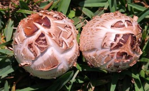 4种常见蘑菇的营养价值 适用于孕妇补充营养