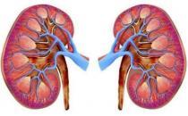 肾好才是硬道理 日常保护肾脏的方法