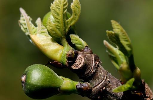 春季养生好时刻 少生病更健康