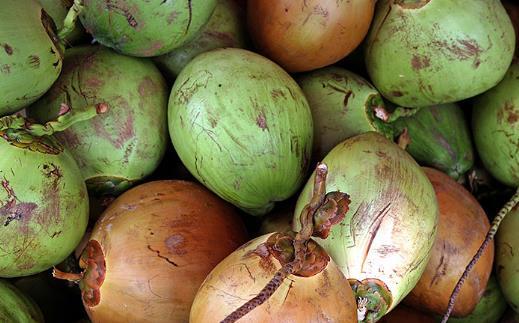 椰子的功效 一道椰子食疗方教给你养颜又滋补