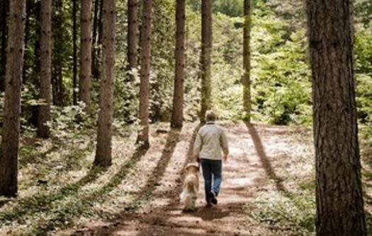 每天走路对身体的好处 把这些缠人的疾病都走掉