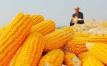 中老年人吃玉米益处多 玉米四功效大揭秘