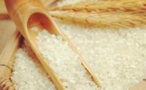 日常生活中吃到的米 米的种类与营养价值