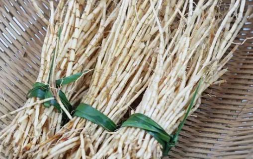 白茅根的功效与作用 茅根水的做法
