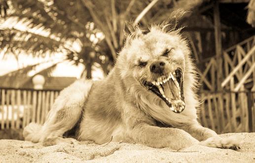 认识狂犬病,多一份认知就少点恐慌。