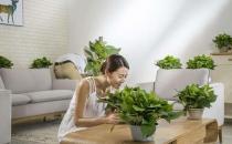 甲醛危害健康 室内除甲醛的方法及优劣