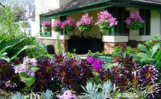 室内养花的技巧 居家室内适合养什么花