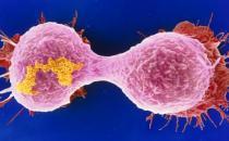可怕的癌症是否会传染 防癌蔬菜水果要多吃