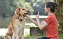 养宠物狗狗 狗狗项圈的使用方法与选购原则