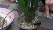施肥是花卉养护中最为关键的一环 四季施肥那些事