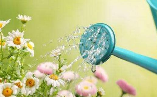 浇水不当是花卉死亡的主要原因 养花要从学浇水开始