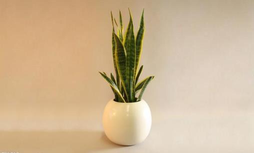 家里有异味 养这些不太起眼还能净化空气的绿色植物