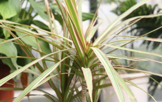 不太起眼能净化空气的绿色植物 适合给室内添置的植物