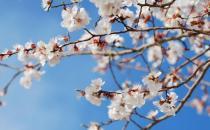 春天养肝护肝最好的季节 要想养肝避免这种伤肝行为