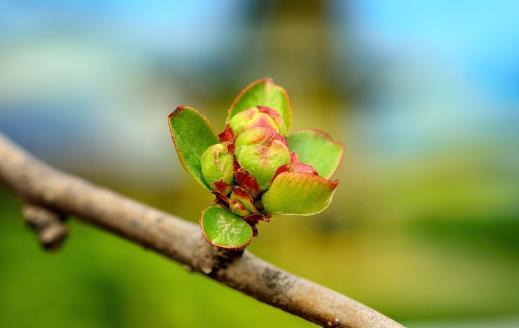 春季养肝护肝好时机 三大口诀教你春天养肝