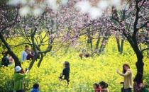 春天外出踏青注意事项 花草虽美小心有毒