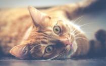经常让猫咪误会的几个动作 翻肚向你不是要你摸