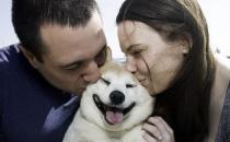 不同的狗狗品种 匹配不同的铲屎官性格相同才最合适