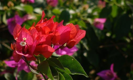 耐干旱好养活的花种推荐 常见植物的种植秘籍