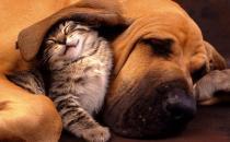 猫咪同狗狗一起养的注意事项 猫狗一起养的好处揭秘