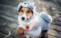 狗狗并不总是喜欢被抚摸 学会抚摸狗狗让它更喜欢你