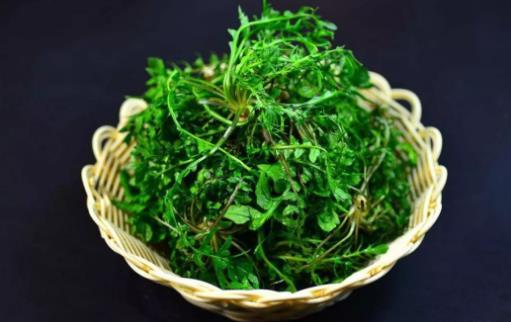 野菜纯天然有营养 野菜的多种做法