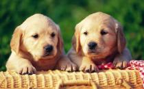 教你如何训练你的爱宠 训练狗狗需正确的方法和耐心