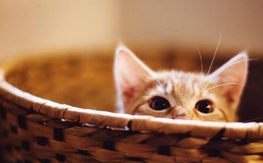 貓爪子上秘密知識 喵喵的肉球是有味道的