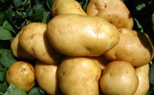 发了芽的马铃薯不可食用 马铃薯的生活小妙用