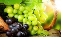 葡萄长时间保存有诀窍 葡萄的功效与营养价值大揭秘