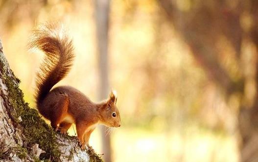 松鼠模仿其他動物甚至人類 松鼠吸引人的地方