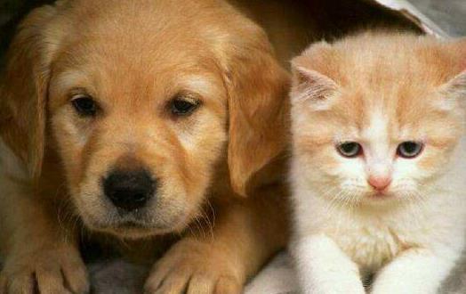 貓未必比狗聰明 貓表示智商測試跟我沒關系